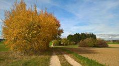 k1024_wanderweg-nach-rohrdorf